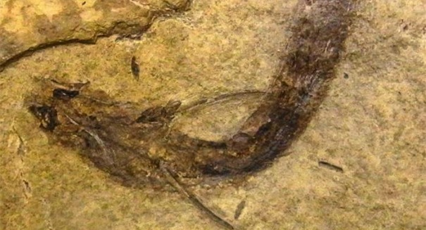 Scientists make stunning discovery: a 300-million-year-old fish could see in color