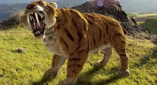 Study: Saber-toothed tiger was a 'lion on steroids,' had quickly growing teeth