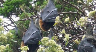 Bats lose lives after flying into wind turbines