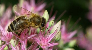 Sunspots contribute to honey bee colony decrease