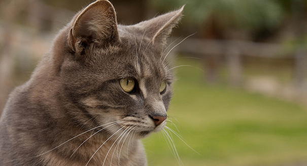 Cat poop parasites may pose public health hazard, study finds
