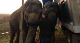 Elephants team up to keep 18-wheeler from tipping over