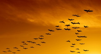 Birds fly 'V' formation because of aerodynamics, study finds