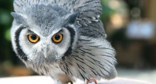 Watch an owl disguise itself as a tree branch [VIDEO]