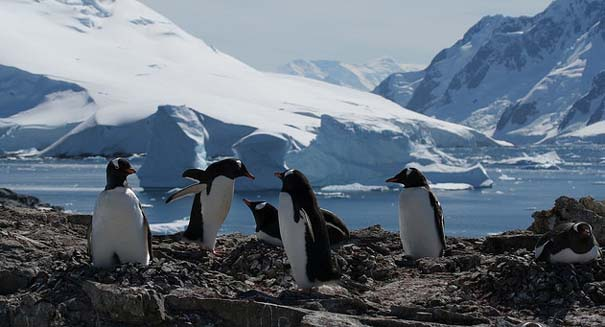 Penguins keep warm by using 'fluid-like' motion