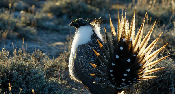 Critics attack bias in federal sage-grouse workshop