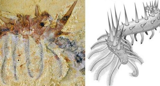 Scientists find bizarre 500-million-year-old spiky worm with 'super armor'